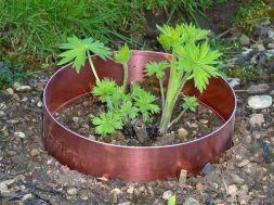 copper tape in garden