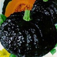 Japanese-Black-Pumpkin