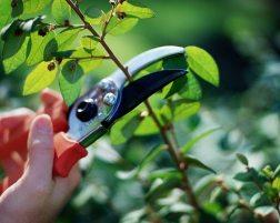 Pruning-Trees-shrubs-1024x817
